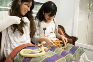 """Women petting a snake """"attendant"""" at the Tokyo Snake Center, Harajuku, Tokyo. For a small fee (540 yen), customers can play with snakes on a sofa."""