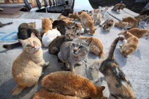 cats-okishima