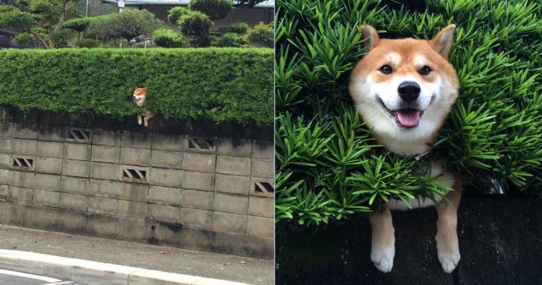 """Mối quan hệ """"thú vị"""" giữa thú cưng và hàng rào đá ở Nhật"""