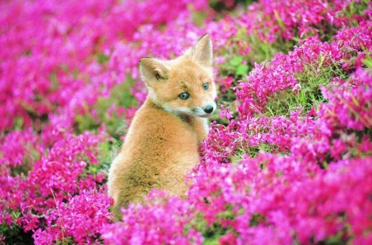 Khám phá những góc nhỏ này của Hokkaido để làm quen với nhiều động vật đáng yêu