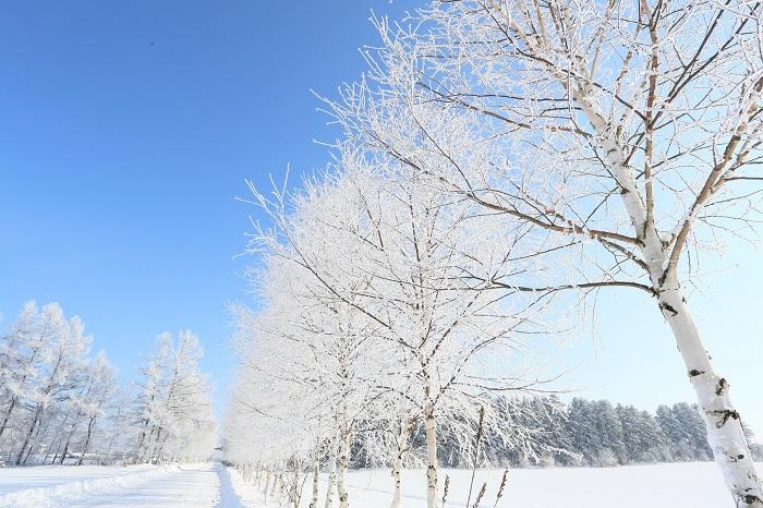 Quen thuộc nhưng ý nghĩa với những từ được người Nhật dùng nhiều nhất vào mùa đông