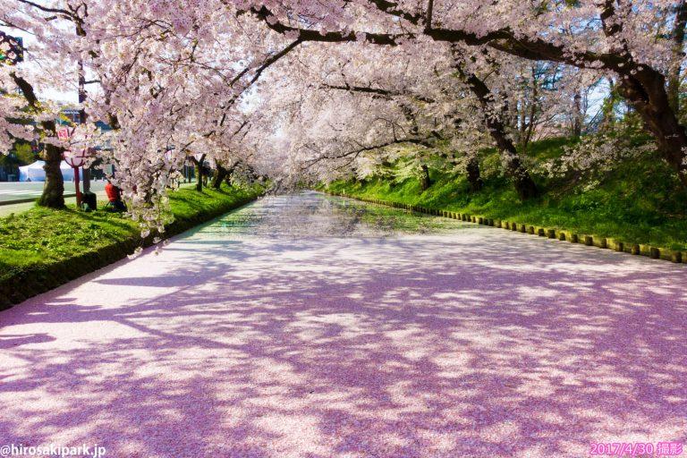 Tổng hợp những địa điểm ngắm hoa Anh Đào đẹp nhất Nhật Bản