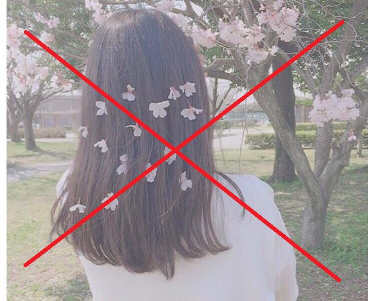 Bẻ hoa Đào chụp hình sống ảo đăng Instagram, cư dân mạng Nhật Bản khiến nhiều người phẫn nộ.