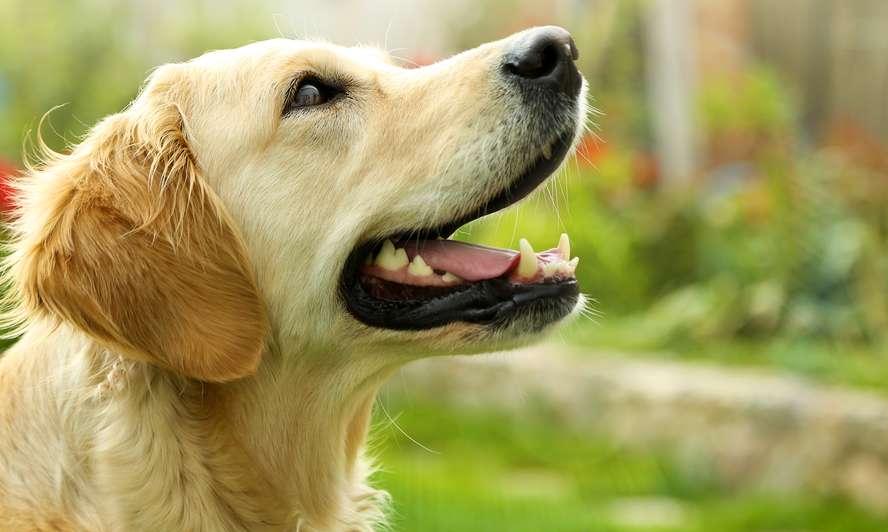 Con chó ăn tạp nhất hành tinh…..đến mướp đắng cũng không tha