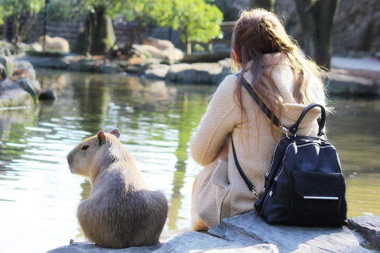 Vườn thú không hàng rào – Không chỉ nhìn tận mắt mà còn được sờ tận tay…