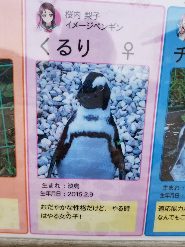 Người Nhật đổ xô đi xem Chim cánh cụt chỉ vì một phản ứng bất ngờ