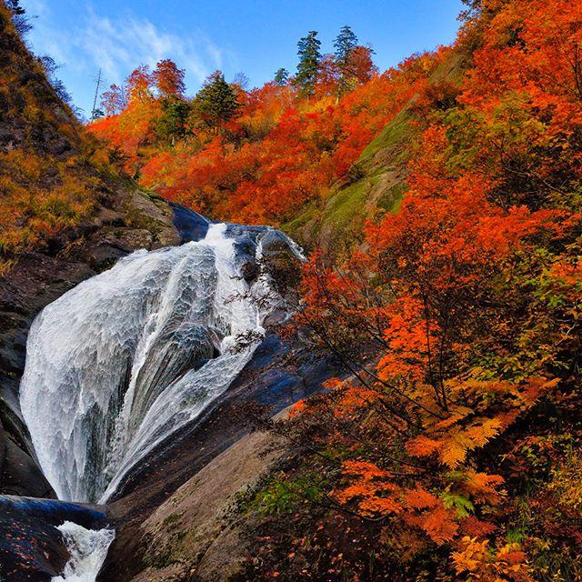 Thêm một địa điểm ngắm lá đỏ cực đẹp tại tỉnh Akita !