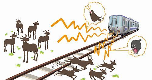 Năm 2016 hơn 600 vụ tai nạn tàu điện xảy ra chỉ vì một nguyên nhân, và đây là cách người Nhật khắc phục