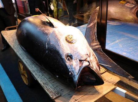 """Chuỗi cửa hàng Sushi bình dân Nhật xác lập kỷ lục mới khi """"chịu chơi"""" đấu giá cá Ngừ năm mới gấp 2 lần mức giá cũ"""
