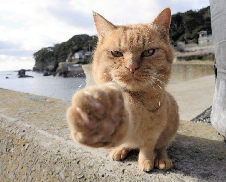 Nhật Bản – trong khi người chen chúc ở đô thị lớn, động vật thảnh thơi ở những vùng đất mà chúng là chúa tể