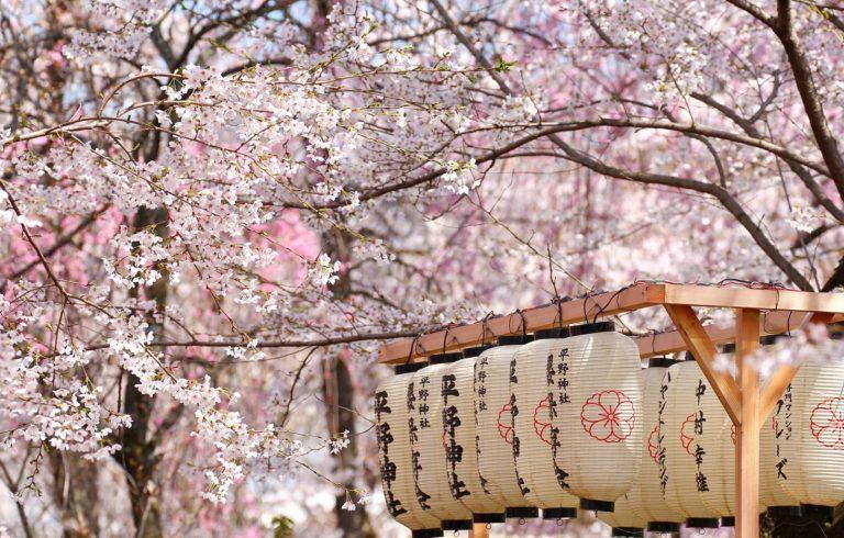 Danh sách thời gian hoa Anh Đào nở 2019! Sakura ở Tokyo nở sớm hơn mọi năm