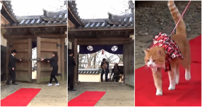 Thần Mèo trở thành chủ lâu đài cao nhất Nhật Bản, kiếm bộn tiền sau khi mất tích trong lũ lụt