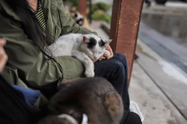 Bên cạnh đảo Mèo, đây là nơi mà các con sen không nên bỏ qua khi đến Nhật
