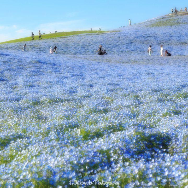 Mùa xuân sang không chỉ có hoa Anh Đào – Những cảnh đẹp bạn có thể đã bỏ lỡ khi đến Nhật