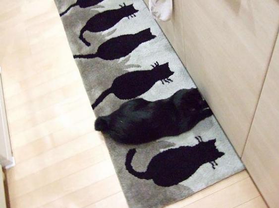 Mèo Nhật đã luyện thành phép ẩn thân của Ninja như thế nào?