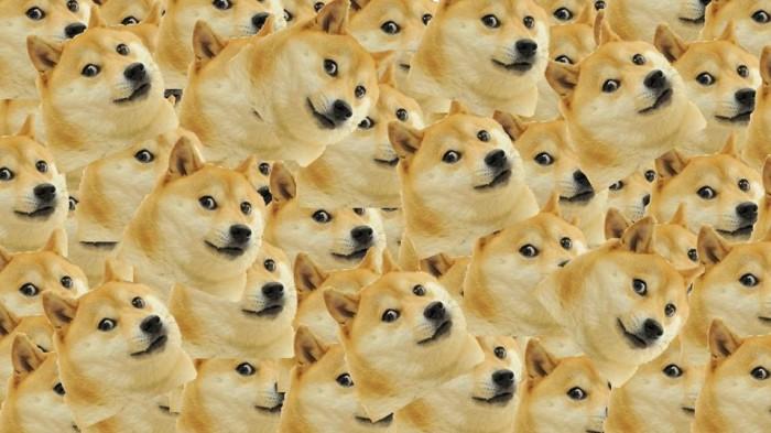 """Gặp gỡ """"bà hoàng của làng Meme"""" – Chó Shiba Kabosu"""