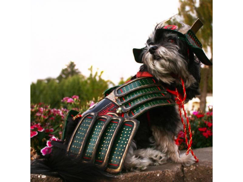 Con sen huyền thoại – Samurai lừng lẫy Nhật Bản viết nên câu chuyện về những chú chó nghiệp vụ đầu tiên
