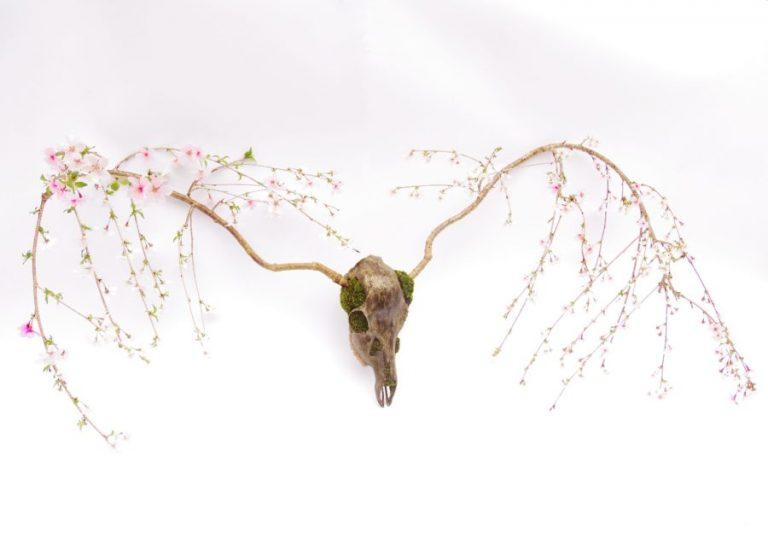 """Loại hình Bonsai """"sọ mọc cành"""" mới phát triển- nghệ thuật hay biến thái?"""