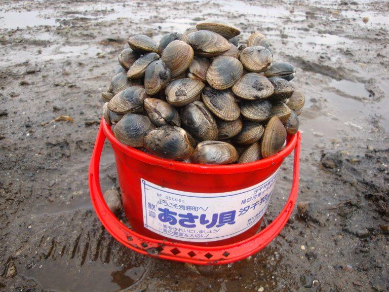 Chớm hè ở Nhật chính là thời điểm tuyệt vời để đi nhặt sò