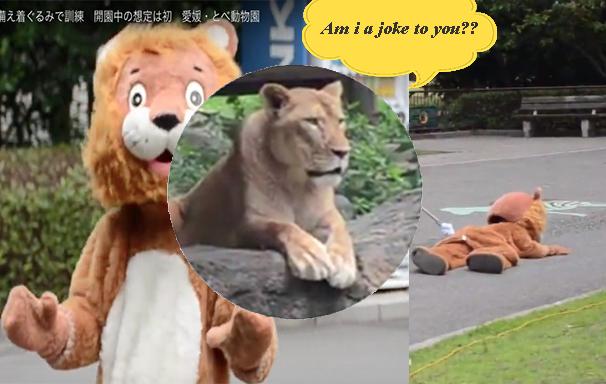 """Hài hước buổi tập huấn sư tử """"vượt ngục"""" của nhân viên sở thú Nhật Bản"""