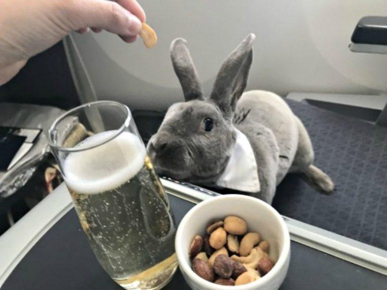 """Sướng như """"Thor"""" của nữ CEO Nhật – Đi máy bay hạng Thương gia, uống Sâm-panh, ăn hạt Điều"""