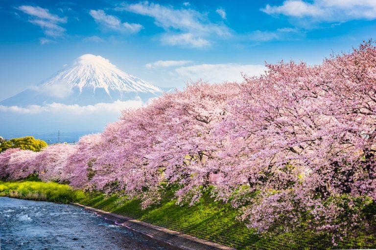 Tour du lịch Nhật Bản: Du Xuân ngắm hoa