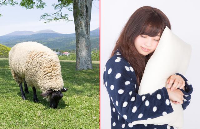 """Giải thích kiểu Nhật – Tại sao phương pháp """"đếm Cừu"""" không giúp chúng ta dễ ngủ hơn?"""