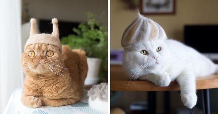 IQ vô cực – Tận dụng lông mèo rụng để làm mũ lông cho mèo