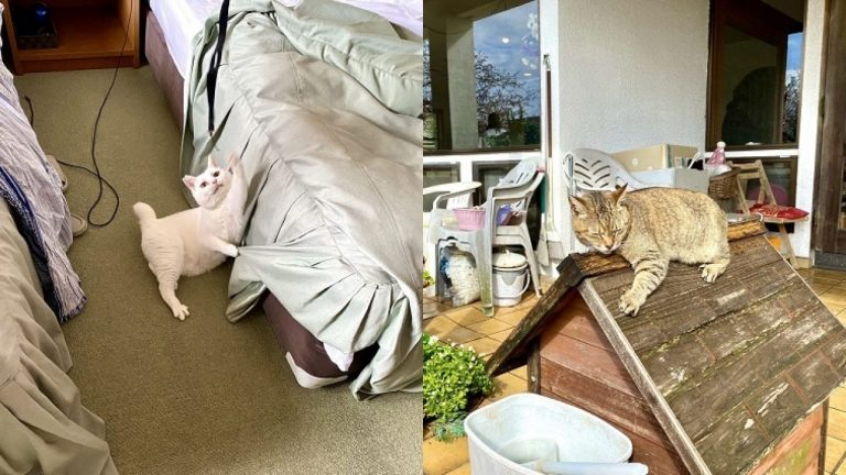 Lữ quán toàn mèo – Thiên đường dành cho người yêu mèo