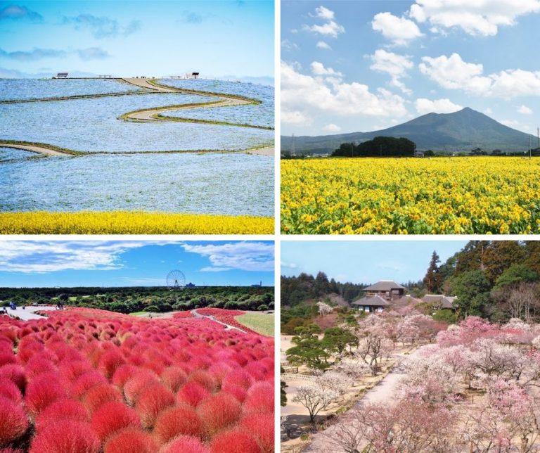 Thiên nhiên bốn mùa tuyệt cảnh ở Ibaraki