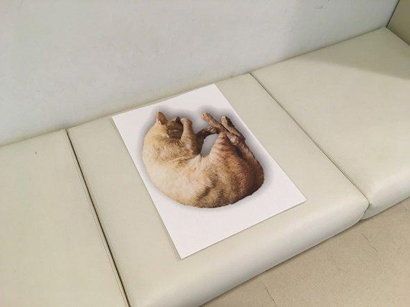 Chỉ là một chú mèo cuộn tròn trên ghế thôi, nhưng lại khiến nhiều người phải trầm trồ