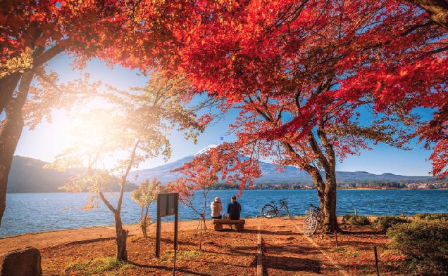 Liệu đôi ta có tình cờ tìm thấy nhau ở mùa lá đỏ năm nay được không?