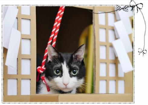 Thần Mèo ngụ trong Đền Thần đạo, nhưng lại ở trong nhà của bạn?