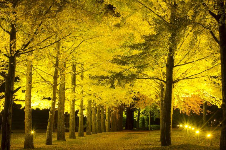 Check ngay các địa điểm ngắm lá đỏ tuyệt đẹp ở Ibaraki