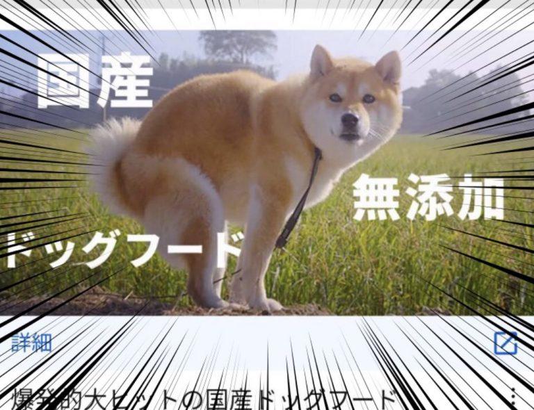 Quảng cáo thức ăn cho chó, nhưng chọn ảnh minh hoạ hơi sai…