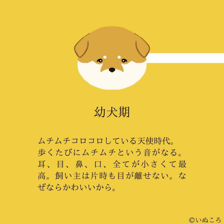 Hoạ sĩ minh hoạ Nhật Bản giải thích tại sao chó ở độ tuổi nào cũng đáng yêu