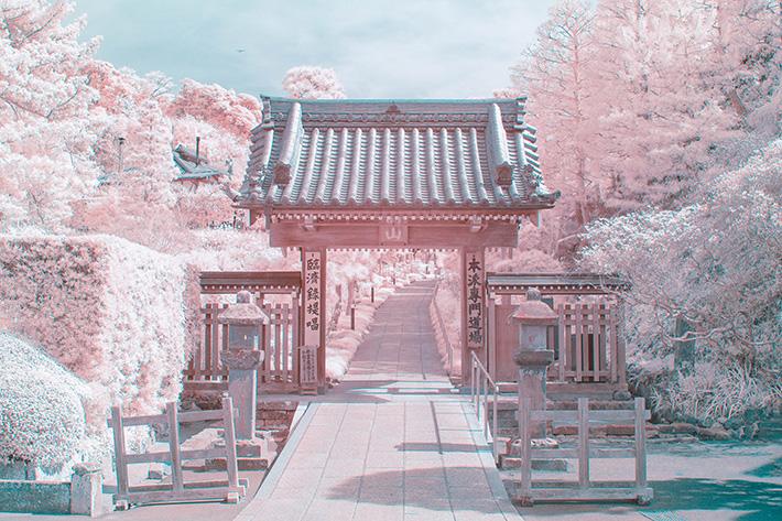 Nhuốm hồng khung cảnh bằng máy ảnh hồng ngoại, nhiếp ảnh gia gây bão trên Twitter