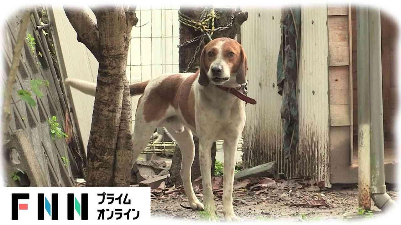Người đàn ông ở Nhật Bản nuôi chó 4 năm, sau đó bị chó cưng cắn đến bất tỉnh