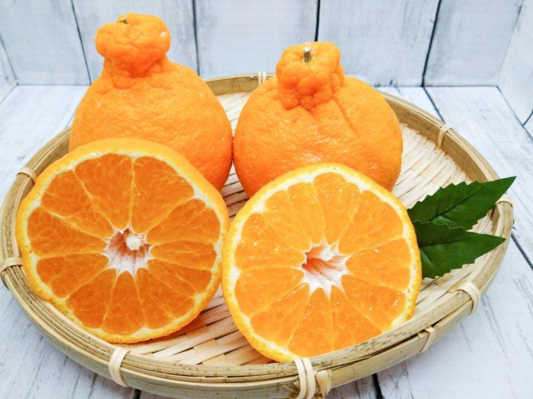 Cam Sumo Citrus của người Nhật Bản có thật sự nổi tiếng thế giới?