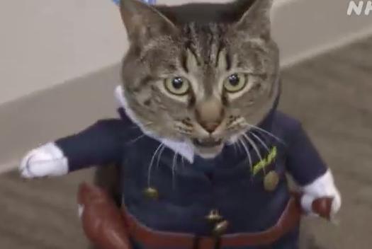 """Vẻ mặt chán ghét của """"anh hùng Mèo từng cứu người"""" được """"vinh dự"""" làm cảnh sát trong một ngày"""