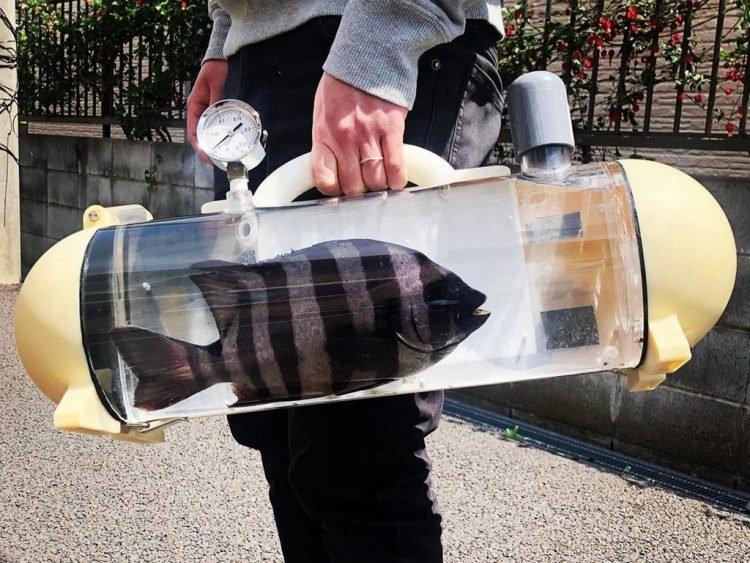 Dị level Nhật – giỏ xách chuyên dụng để dắt cá cảnh đi dạo phố
