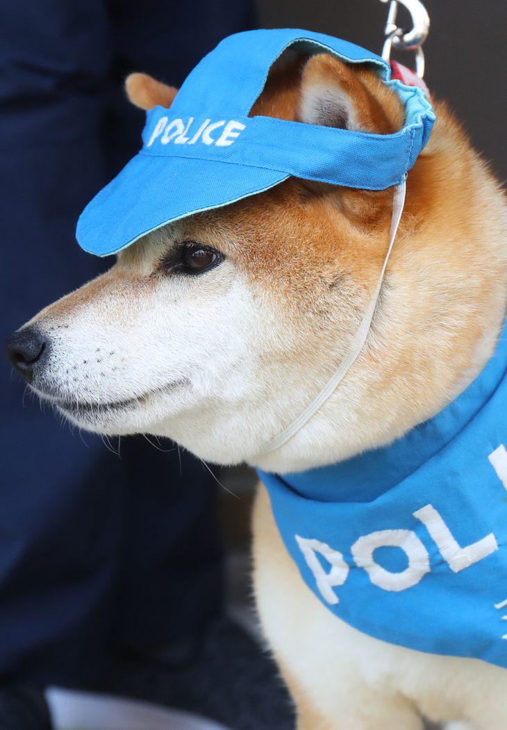 Cảnh sát Kyoto gửi thư tỏ lòng biết ơn đối với chú chó Ayaka đã luôn bảo vệ sự an toàn cho các em học sinh