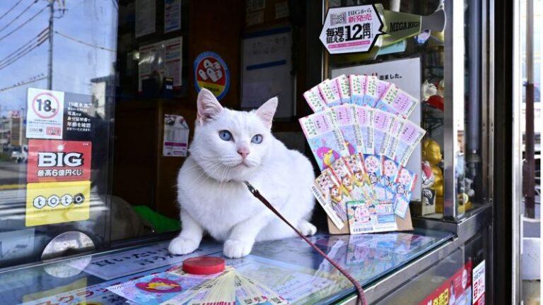 Maneki Neko đời thực – đem may mắn đến cho khách hàng 29 lần, tổng giá trị trúng số lên tới 2,6 tỷ yên
