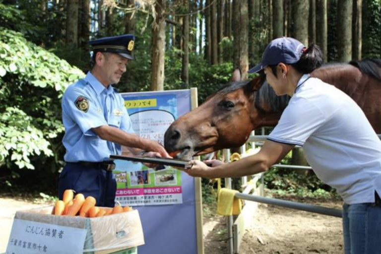 Bí ẩn Haru Urara – Chú ngựa đua quái dị chưa từng thắng trận nào, vẫn được cho ra đua đều đặn, kiếm tiền không thua kém những con ngựa thần tốc