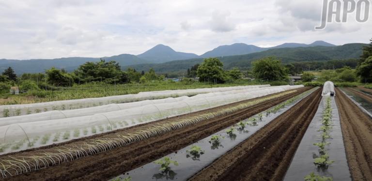 Bình yên nơi nông thôn Nhật Bản