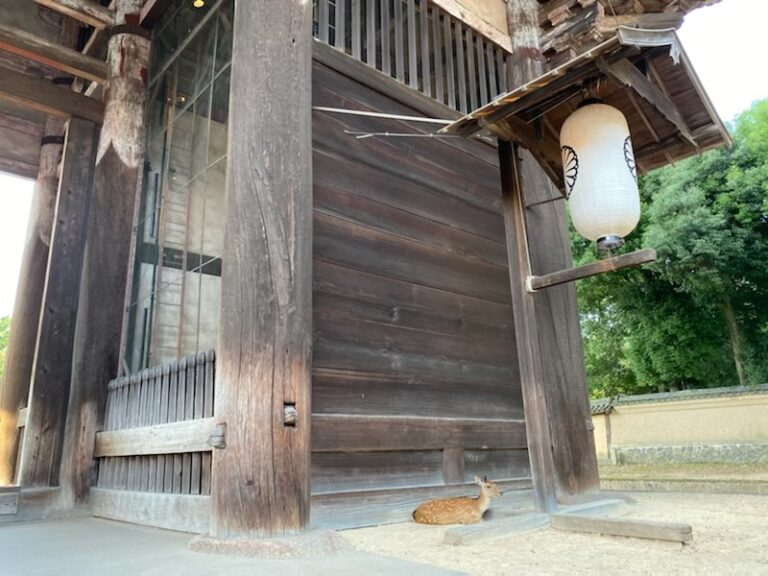 Một ngày của Hươu Nara